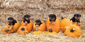 Seattle Area Weekend Dog Events: Friday, October 5 – Sunday, October 7
