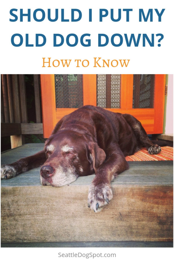 How to Know When It's time to Put Down Your Old Dog | Seattle DogSpot
