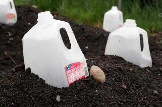 Reusing big plastic water/milk bottles/jugs (6/6)