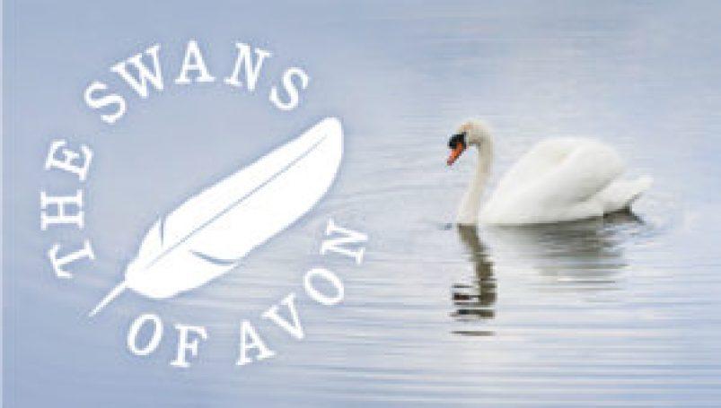Swans of Avon web banner