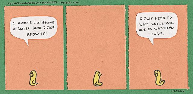 hughs-manatees