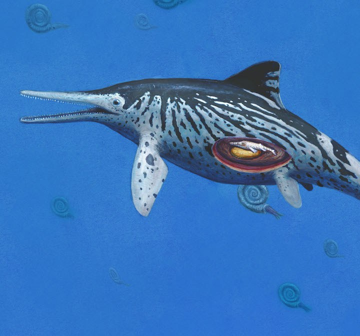 Life After Death: Largest Discovered Ichthyosaurus Preserves a Fossilised Embryo