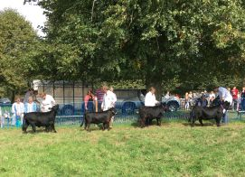 Alresford Agricultural Show