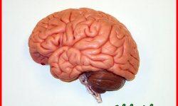 7 Cara Menyehatkan Otak Kanan Biar Makin Cemerlang!