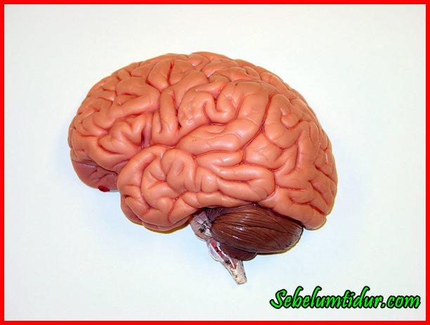Permalink to 7 Cara Menyehatkan Otak Kanan Biar Makin Cemerlang!
