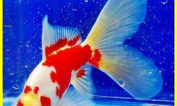 Inilah 7 Fungsi Hati Pada Ikan Yang Perlu Kamu Ketahui