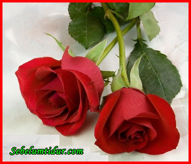 mencari pasangan hidup yang baik, cara mencari pasangan hidup, cara mencari jodoh