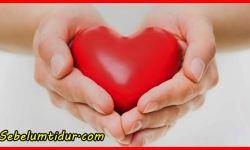 7 Nama Penyakit Yang Berhubungan Dengan Darah Dan Jantung