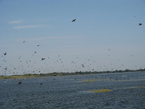 Disturbing a bird oasis in the Danube Delta
