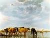 cows-in-the-water