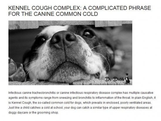 Dr. Dodds Kennel Cough Complex