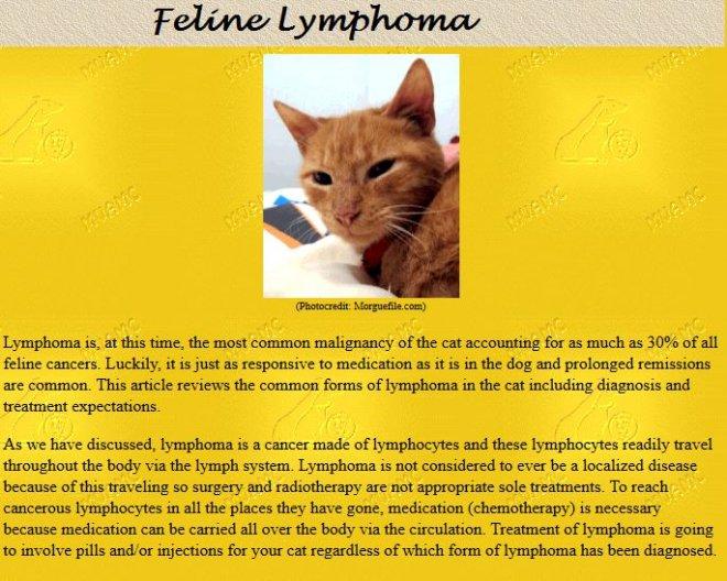 Feline Lymphoma