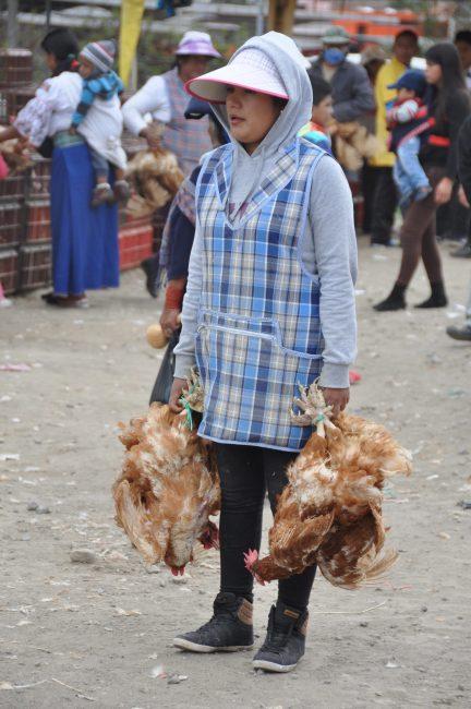 Chicken vendor, feria de animales (animal market), Otavalo