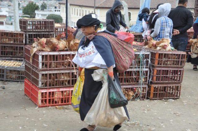 Small animal section, feria de animales (animal market), Otavalo