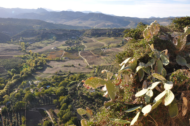 View from cliffs of Ronda