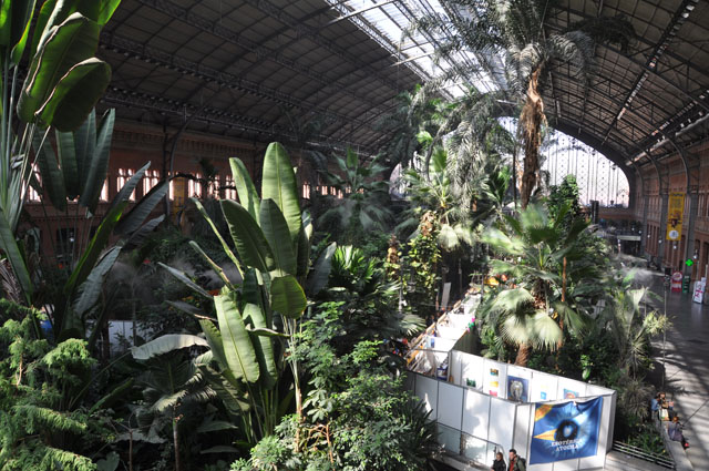 Madrid Atocha. The only train station I've ever seen that contains a tropical rainforest.