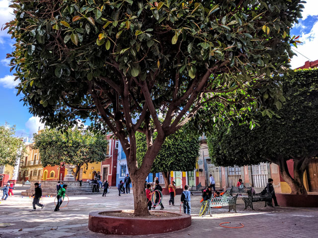Kids playing in the Plaza de Mexiamora on my way to school, Guanajuato