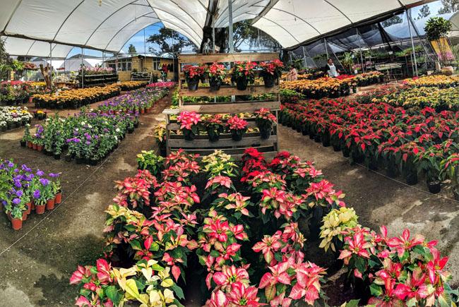 Visiting Atlixco's famous greenhouses on a Livit excursion