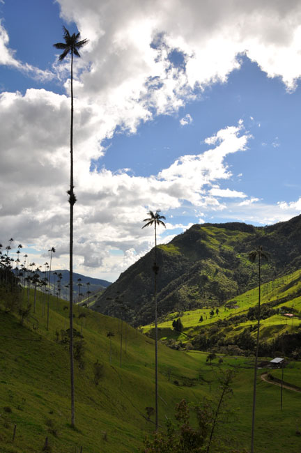 Valle de Cocora hike, Colombia