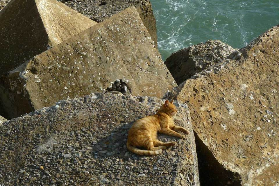 Cat on the breakwater, Cadiz