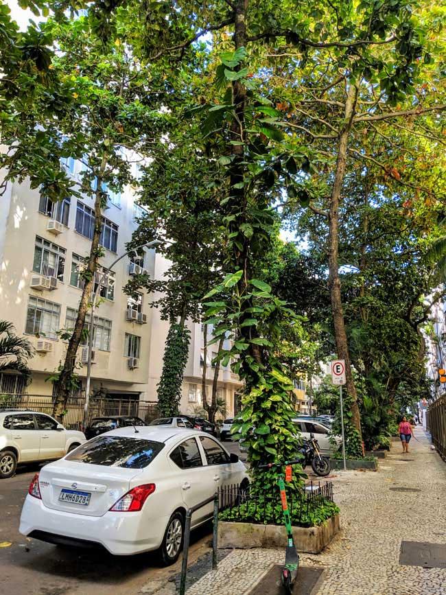 Typical street, Ipanema