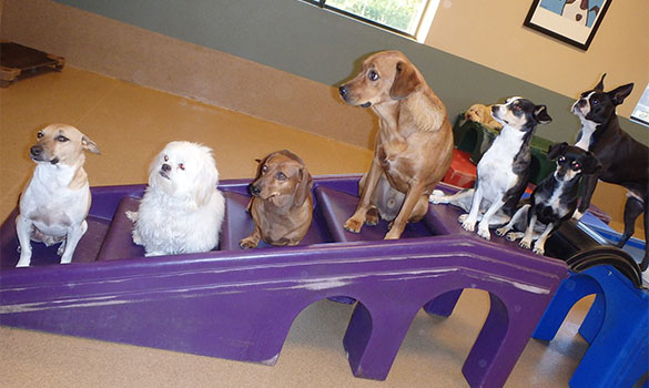 What to Look for in a Doggie Day Care Center