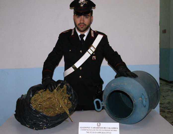 Santa Severina, 2,5 chili di marijuana scoperti in un casolare