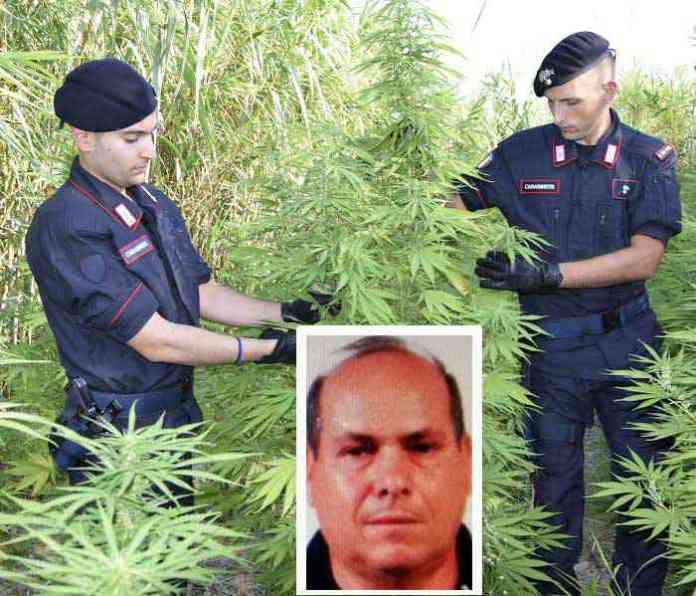 Marijuana in un canneto, arrestato a Crotone Cosimo Muscatello
