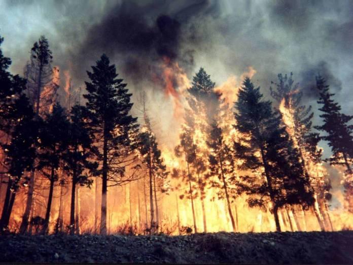incendio boschi