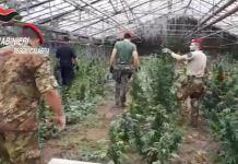 piantagione marijuana San Martino di Taurianova