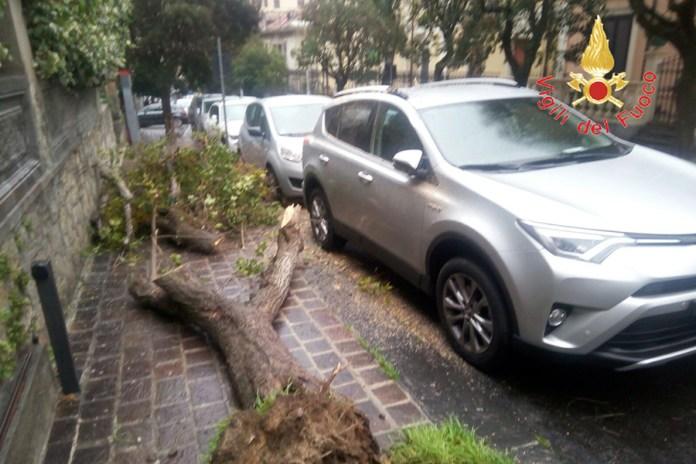 maltempo albero caduto crotone