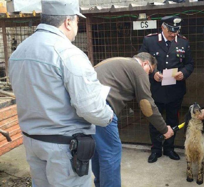 animali cani maltrattati