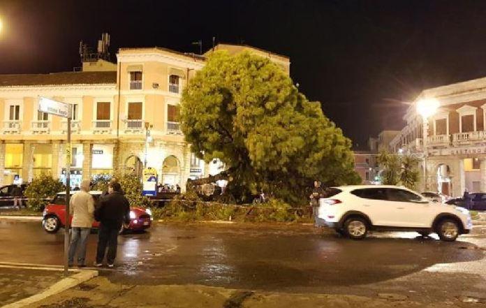 Pino marittico caduto a Crotone