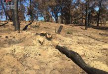 taglio alberi illegale