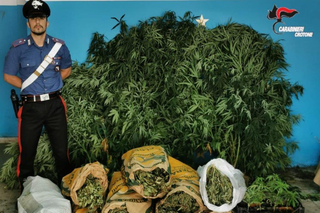 Trovato con 18 kg di marijuana e piante di canapa, in carcere
