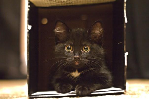 Cat-in-box-2