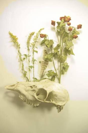 Side skull with flowers optimised