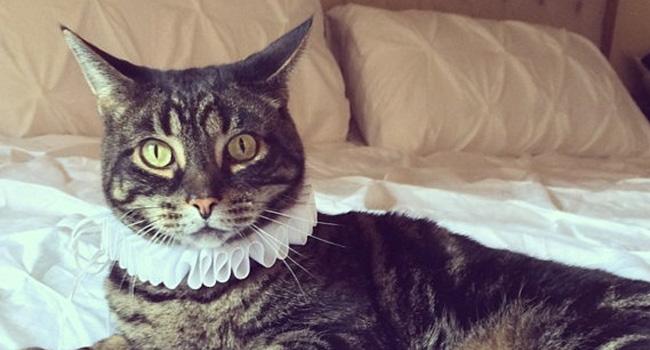 cat renaissance ruff neck