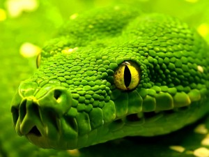 green_snake_23835