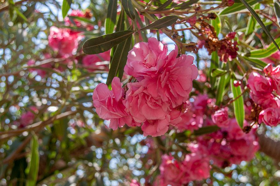 Цветы в Тунисе