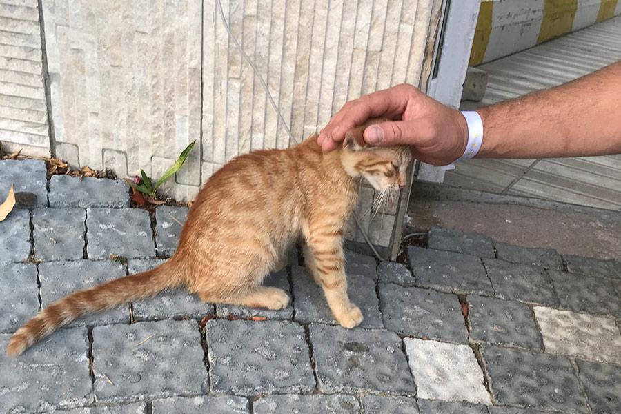 Котята в Турции