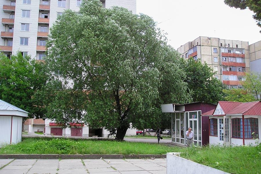 Улица Пулюя