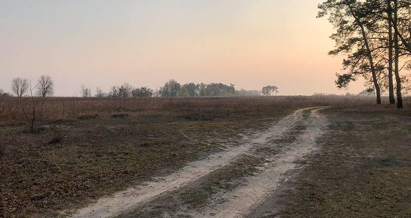 Дорога возле лесочка