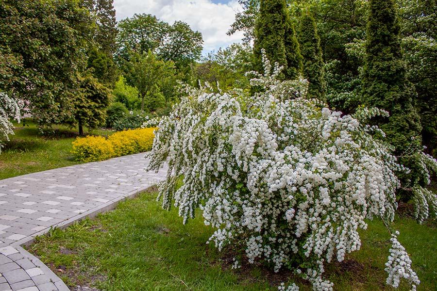 В ботаническом саду на метро Университет