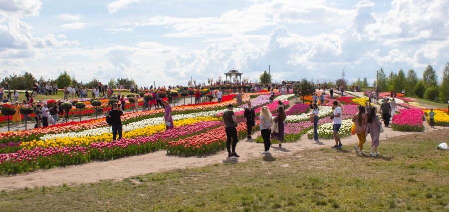 Добропарк тюльпаны 2021