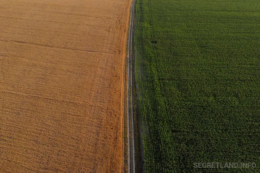 Пшеница и кукуруза