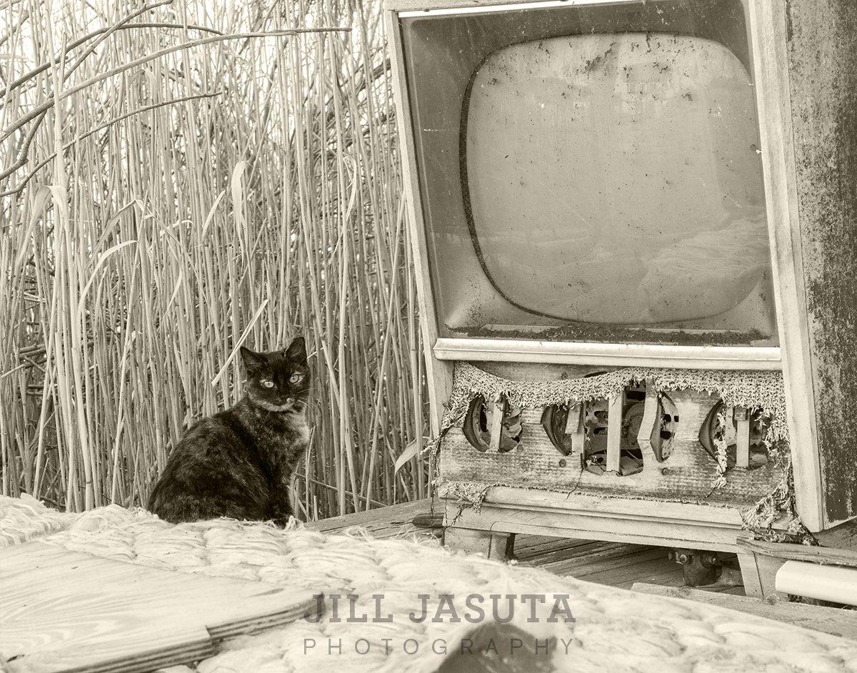 Cat on Porch in Crocheron (JJP)