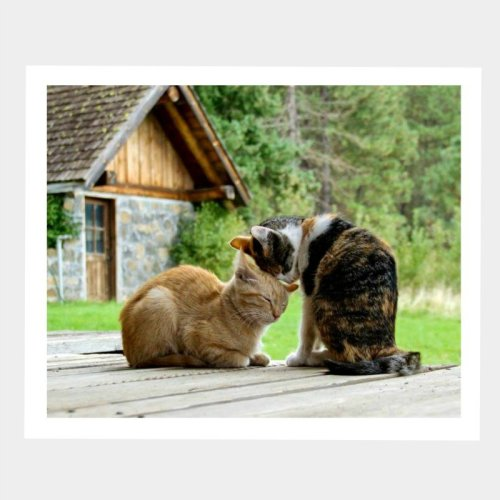 Barn Cats Snuggling Greeting Card at Secrets of the Eastern Shore