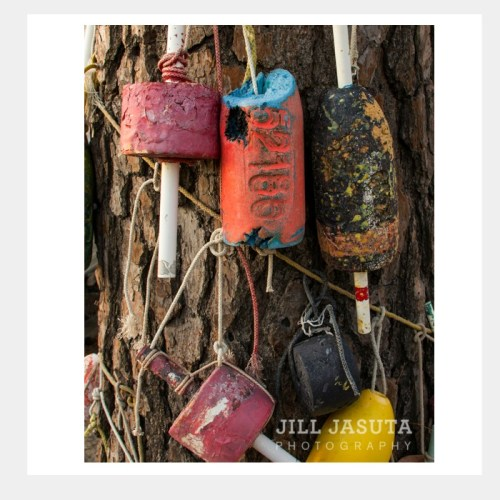 Buoys on a Tree Eastern Shore Greeting Card PRODUCT