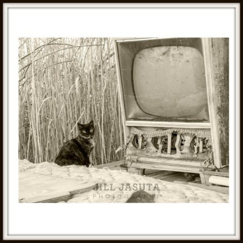 The Cat Who Loves TV Photo Print